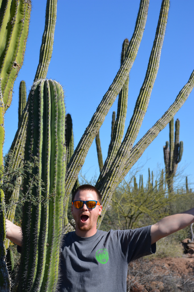 Wow. Such cactus.